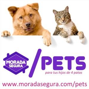 servicio pets